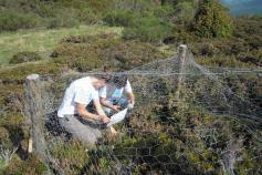 Voluntarios de Parques Nacionales colaboran en la reparación de cajones de exclusión para el estudio de las arandaneras