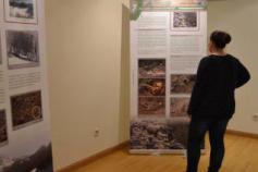 Exposición sobre el urogallo cantábrico en Ribadesella (Asturias)