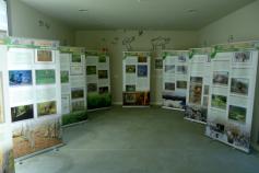 Exposición del urogallo cantábrico en el Museo Etnográfico de Quirós